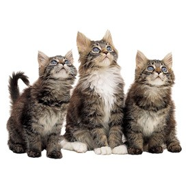 Cats Billboard | Artlantis Billboards FREE Download