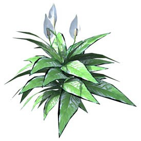 Spathiphyllum 3D Object | FREE Artlantis Objects Download
